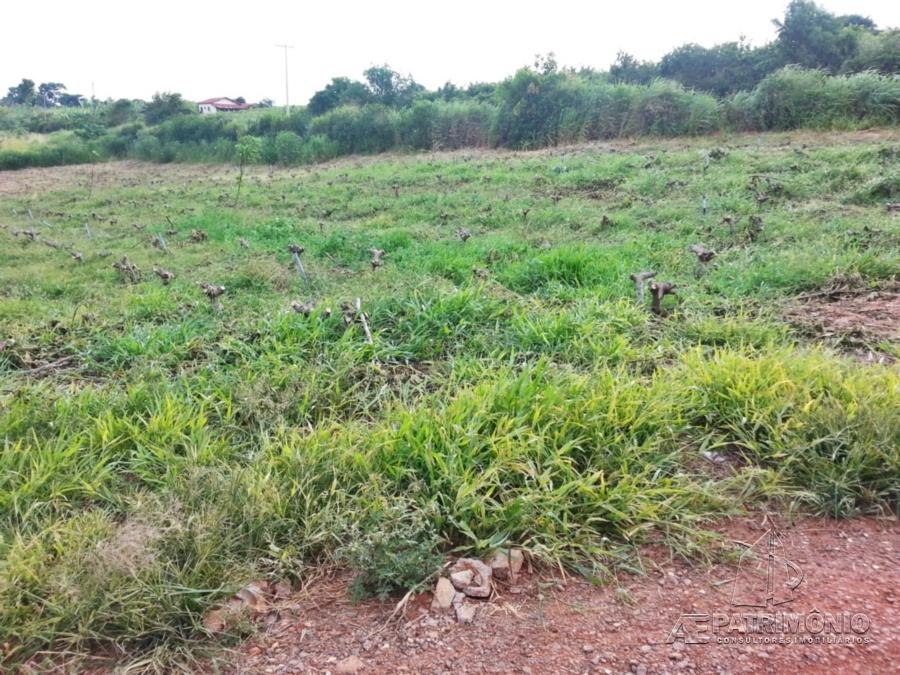 Área à venda em Nucleo Agrario Capivari, Campinas - Sp